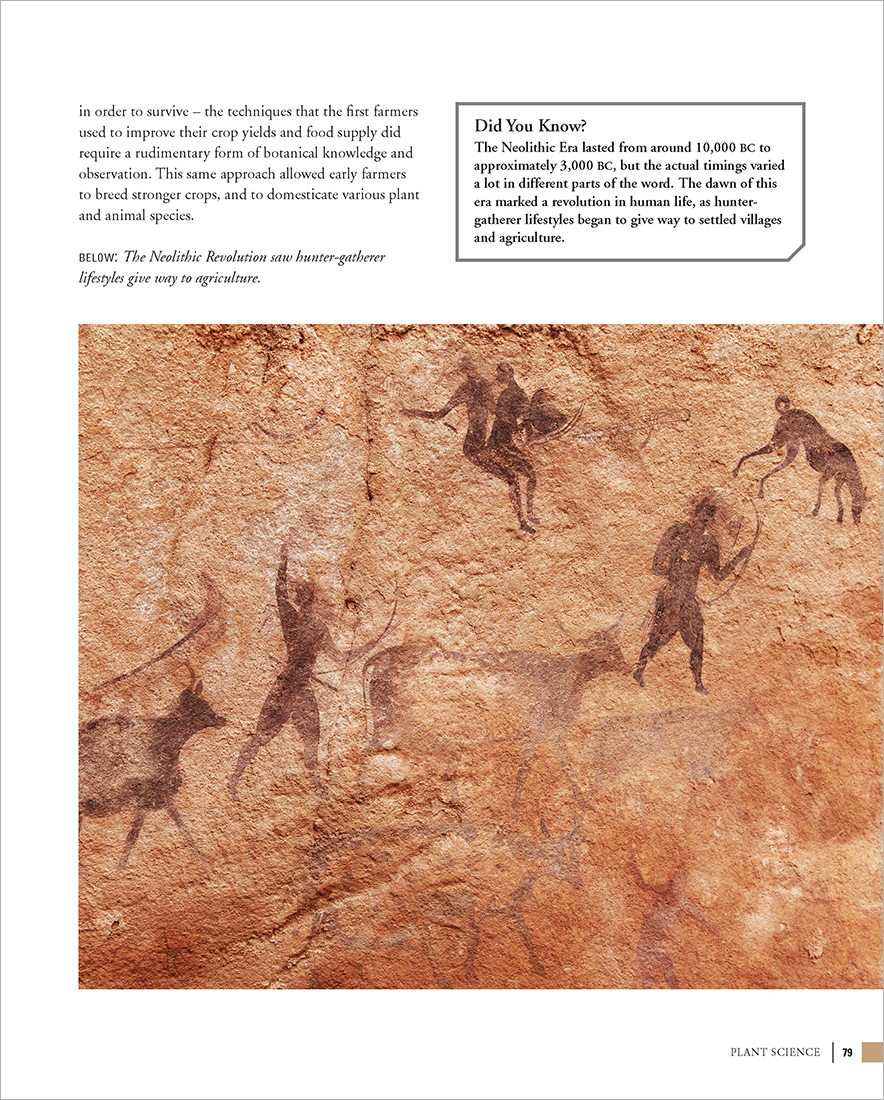6: Plant Science—Neolithic Era