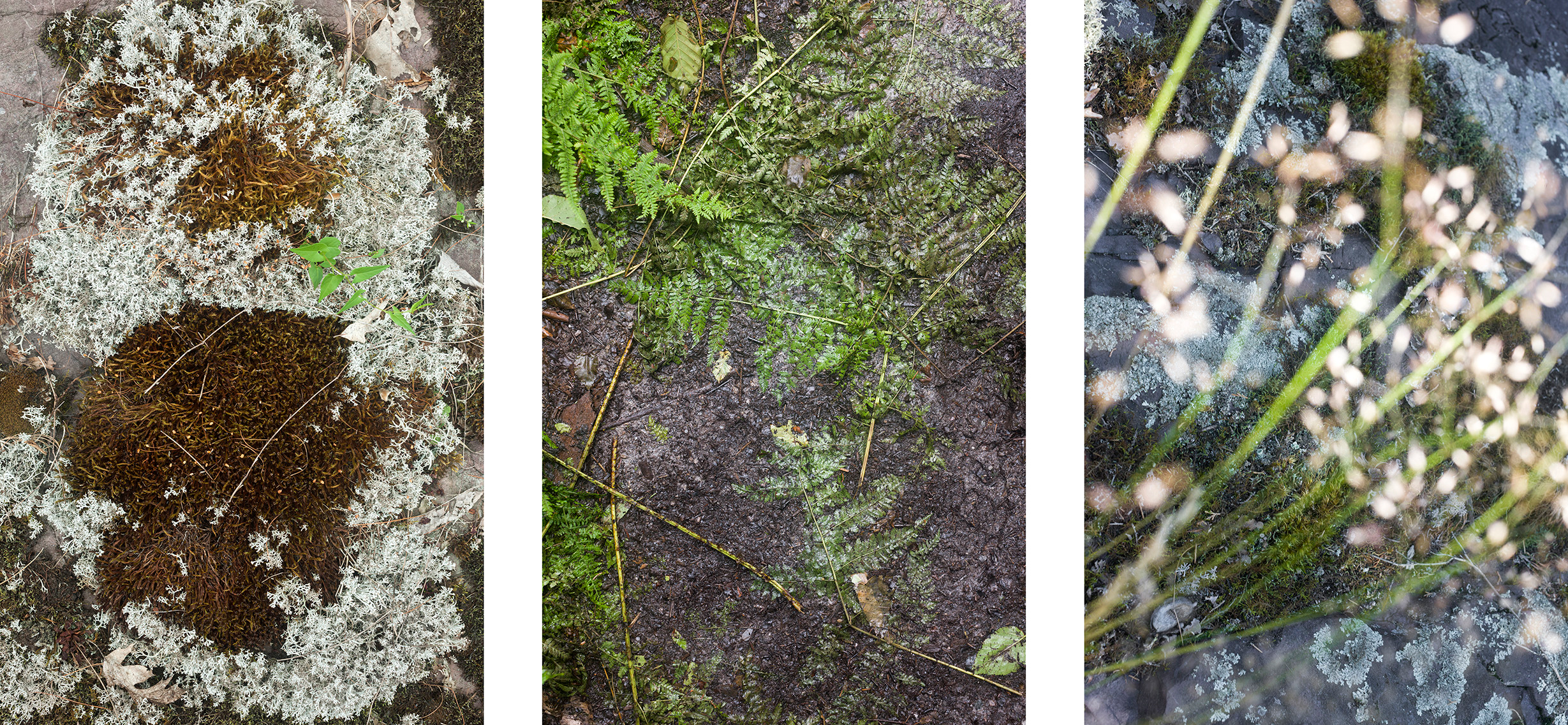 Triptych looking down on the forest floor.