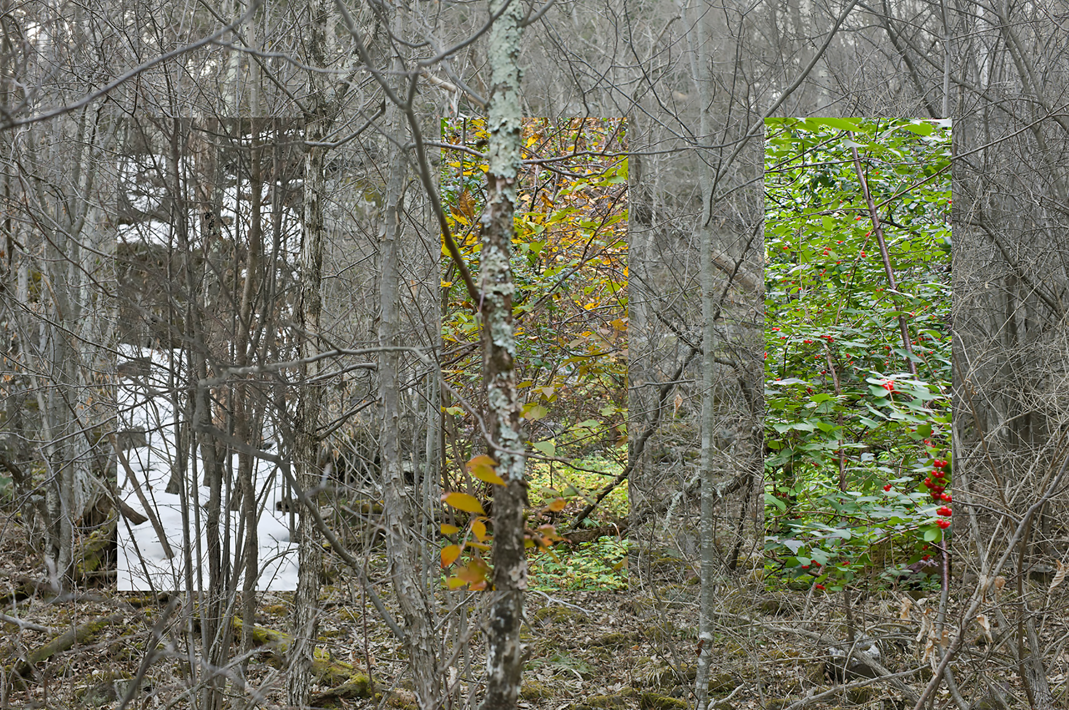 """Time composite"" looking through thicket in the woods."