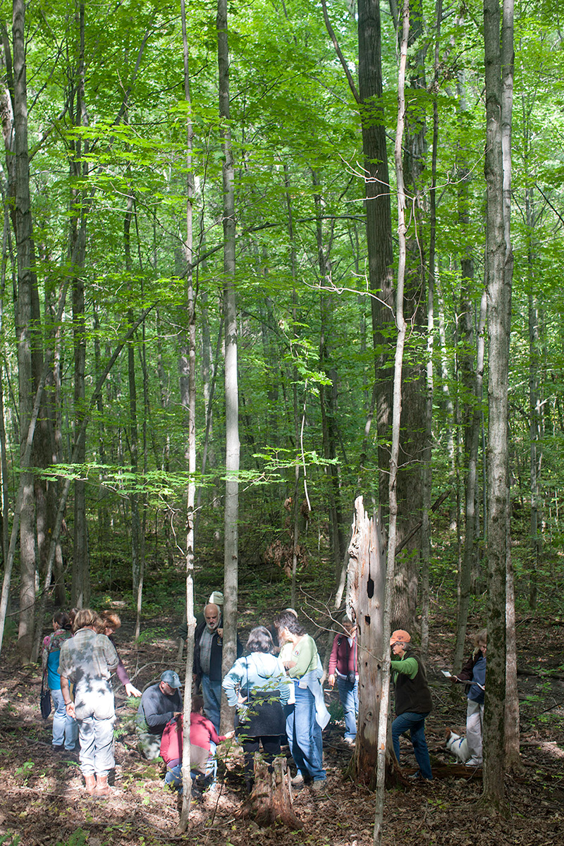 People hunting for mushrooms in the woods.