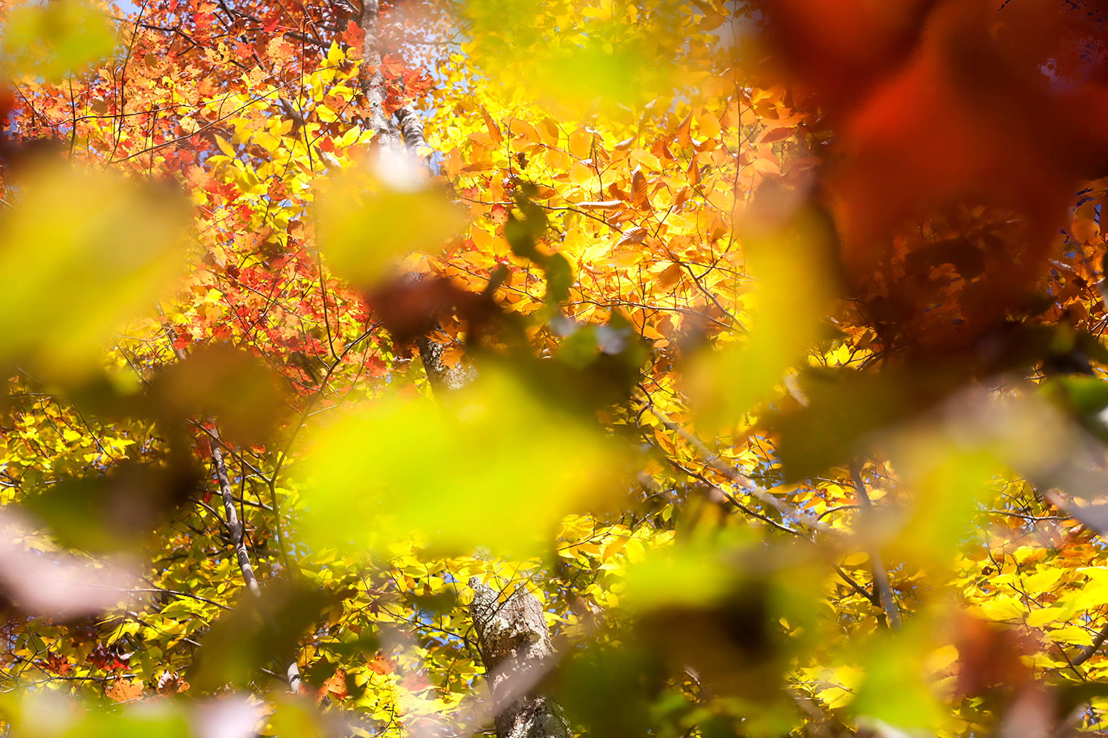 Abstract image looking through the woods on a fall day.